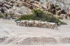 Las Flechas峡谷在萨尔塔,阿根廷 免版税图库摄影