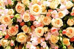 Las floraciones color de rosa Fotos de archivo libres de regalías