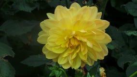 Las flores Foto de archivo