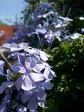 Las flores fotografía de archivo libre de regalías
