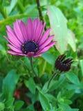 Las flores Foto de archivo libre de regalías
