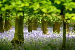 Las flores Imagen de archivo