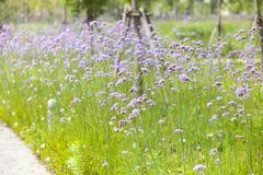 Las flores acercan al camino Imagen de archivo