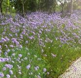Las flores acercan al camino Fotografía de archivo