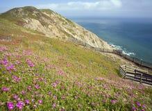 Las flores acercan a la punta Reyes Foto de archivo libre de regalías