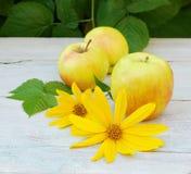 las flores amarillas de la alcachofa de Jerusalén dos en el blanco de la tabla se van fotografía de archivo libre de regalías