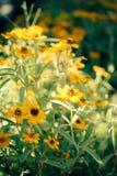 Las flores amarillas hermosas en estilo del vintage Fotografía de archivo libre de regalías