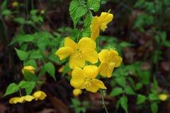 Las flores amarillas se cierran para arriba imagen de archivo