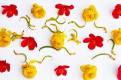 Las flores amarillean, rojo, aislado en el fondo blanco Fotografía de archivo