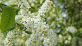 Las flores blancas Fotos de archivo libres de regalías