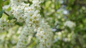 Las flores blancas Imagenes de archivo