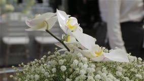 Las flores blancas de las orquídeas diseñan almacen de video