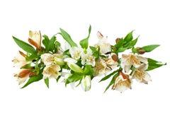 Las flores blancas del alstroemeria ramifican en cierre aislado el fondo blanco para arriba imagen de archivo