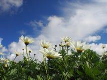 Las flores blancas están floreciendo en los jardines de flores en el invierno Imagenes de archivo