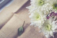 Las flores blancas hermosas con el sol se encienden en fondo del yute Imágenes de archivo libres de regalías