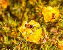 Las flores brillantes en el macizo de flores en ciudad parquean Foto de archivo libre de regalías
