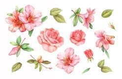 Las flores color de rosa blancas del lirio de la azalea del vintage del rosa fijaron aislado en el fondo blanco Ejemplo coloreado ilustración del vector