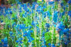 Las flores colorean el azul Fotos de archivo