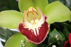 Las flores coloridas, anaranjadas, rojas, púrpuras, verdes se adoptan como regalo de boda Foto de archivo libre de regalías