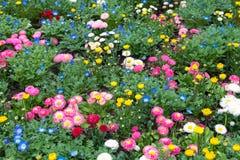 Las flores coloridas ponen verde el parque en Tokio Japón el 31 de marzo de 2017 | Fondo hermoso de la naturaleza Imágenes de archivo libres de regalías