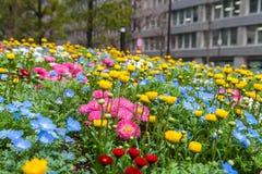 Las flores coloridas ponen verde el parque en Tokio Japón el 31 de marzo de 2017 | Fondo hermoso de la naturaleza Fotografía de archivo libre de regalías
