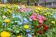 Las flores coloridas ponen verde el parque en Tokio Japón el 31 de marzo de 2017 | Fondo hermoso de la naturaleza Fotos de archivo libres de regalías