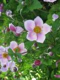 Las flores como de cuento adornan delicado un jardín Fotografía de archivo libre de regalías