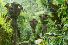 Las flores concretas en la selva en Edward James cultivan un huerto en Xilitla México Imagen de archivo libre de regalías
