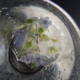 Las flores congeladas en un florero de vidrio con agua caen en un fondo negro Foto de archivo