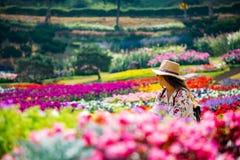 Las flores cultivan un huerto lleno de color imagen de archivo libre de regalías