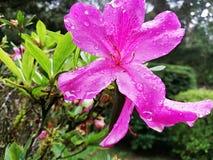 Las flores de Biuty imágenes de archivo libres de regalías