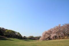 Las flores de cerezo en el parque de Negishi Shinrin imágenes de archivo libres de regalías