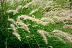 Las flores de la hierba Foto de archivo libre de regalías