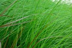 Las flores de la hierba Imagen de archivo