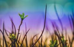 Las flores de la hierba están en la ciudad con th de color claro de los resplandores de la noche fotografía de archivo libre de regalías