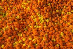 Las flores de la maravilla también conocidas como el genda florecen para el contenido del fondo imágenes de archivo libres de regalías