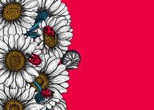Las flores de la margarita dan la tarjeta exhausta stock de ilustración