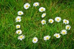 Las flores de la margarita formaron dimensión de una variable del corazón Imagenes de archivo