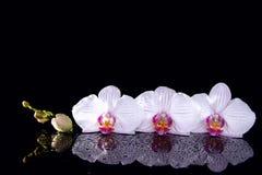 Las flores de la orquídea con agua se inclinan y reflexión en un backg negro fotografía de archivo libre de regalías