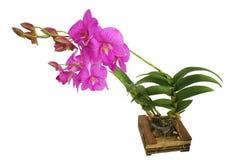 Las flores de la orquídea del rosa Fotos de archivo libres de regalías