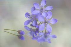 Las flores de la púrpura Fotografía de archivo
