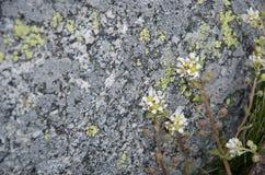 Las flores de la playa se cierran hasta la piedra Foto de archivo libre de regalías