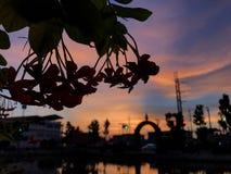Las flores de la silueta Imagen de archivo
