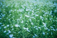 Las flores de lino se cierran para arriba foto de archivo libre de regalías