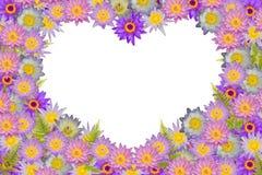 Las flores de loto en forma de corazón púrpuras rosadas y el helecho verde se va en el fondo blanco Foto de archivo