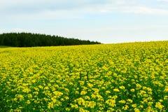 Las flores de oro Fotografía de archivo