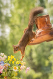 Las flores deben oler mejor Imagen de archivo libre de regalías