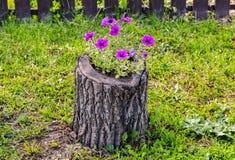 Las flores decorativas crecen en el tocón fotografía de archivo libre de regalías