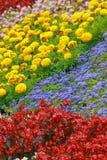 Las flores decorativas multicoloras se cierran para arriba en verano Imagenes de archivo