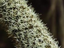 Las flores del árbol de hierba se cierran para arriba foto de archivo